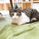 「ネコリパブリック東京お茶の水店」の個室の猫さんたち