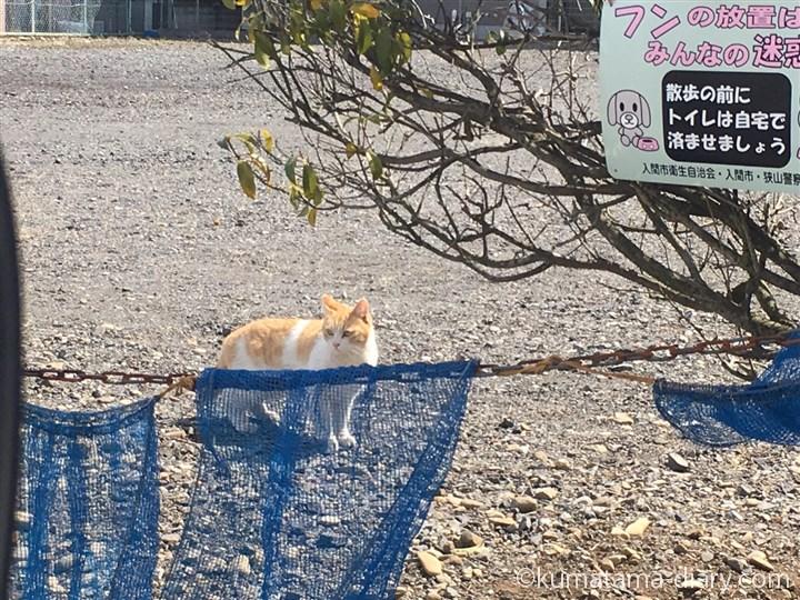 入間市の猫さん
