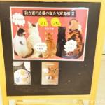 赤坂ジャローナの第3回「我が家の自慢の猫たち写真展」に参加します