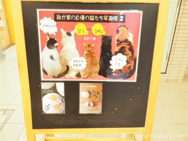 ジャローナ猫写真展