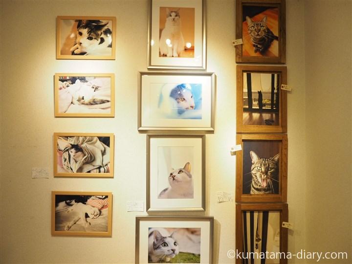 我が家の自慢の猫たち写真展