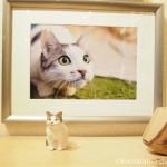 赤坂ジャローナの「我が家の自慢の猫たち写真展2」を見に行きました