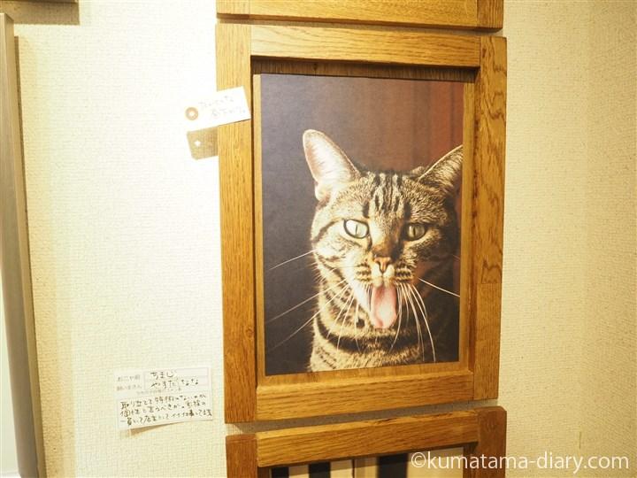 ちまじやさんちの猫さん
