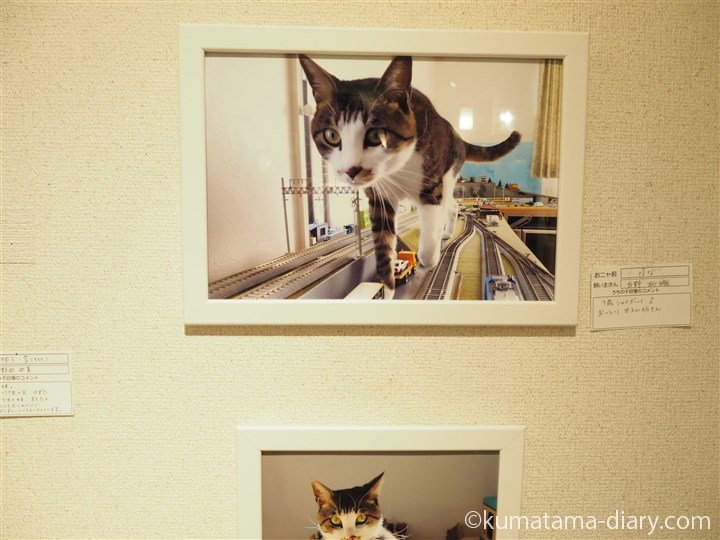 吉野砂織さんちの猫さん