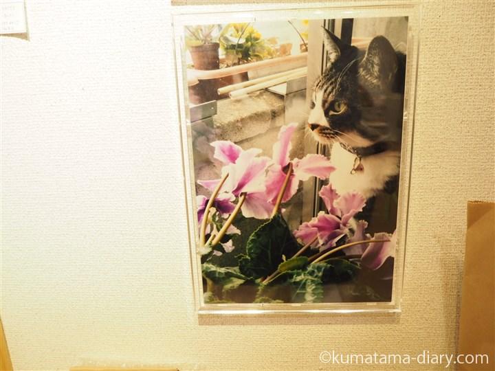 松本恵美(神威ひなた)さんちの猫さん