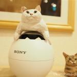 赤坂ジャローナ「我が家の自慢の猫たち写真展2」でバンナイリョウジさんの木彫り猫を見ました