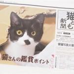 『月刊猫とも新聞』2017年4月号の特集は「猫さんの鑑賞ポイント」です