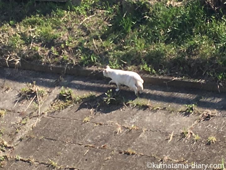 逃げる白猫さん3