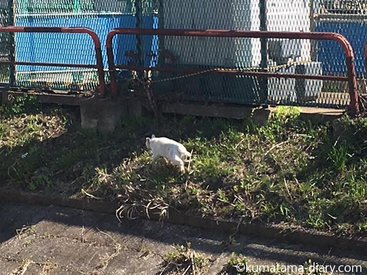 逃げる白猫さん4