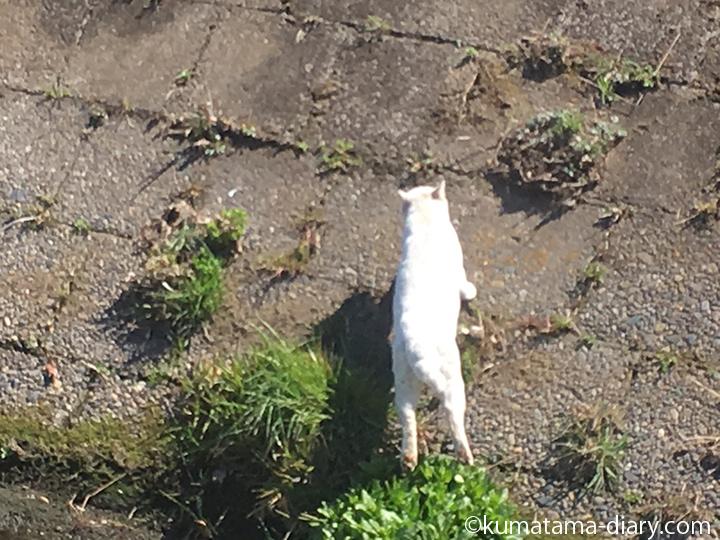 逃げる白猫さん1