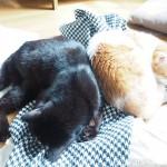 1つのクッションで背中をくっつけ合って仲良く寝る猫たち