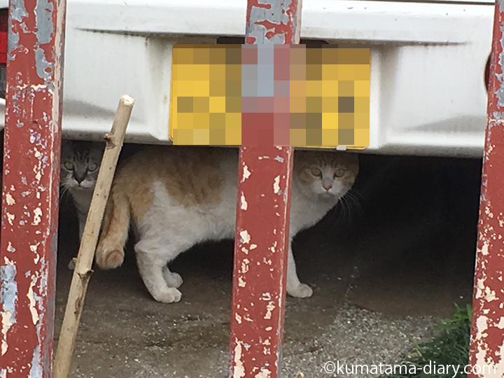 車の下の2匹の猫さん