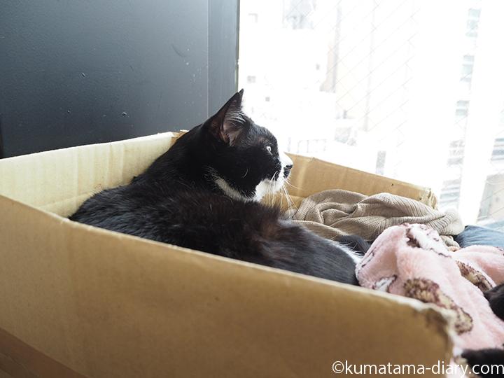 黒白猫のぎんちゃん