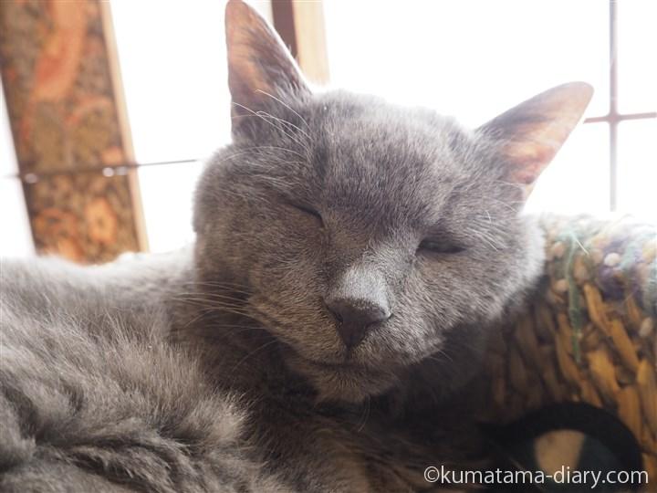 眠るギンちゃんの顔