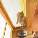 下から猫さんが見える「ネコリパブリック東京お茶の水店」の素敵な場所
