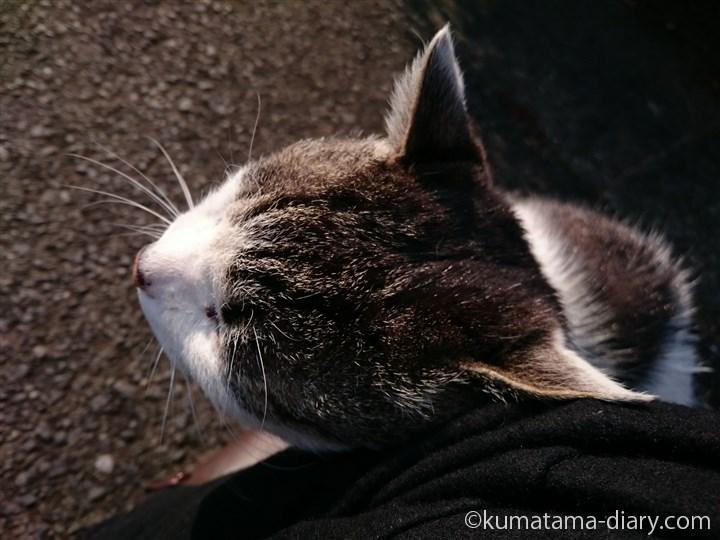 キジトラ白猫さんすりすり