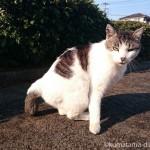近所のキジトラ白猫さんの不細工な顔が撮れました