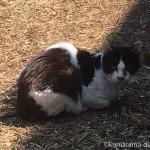 【八王子】丘の上の赤道(あかみち)にたたずむ黒白猫さん
