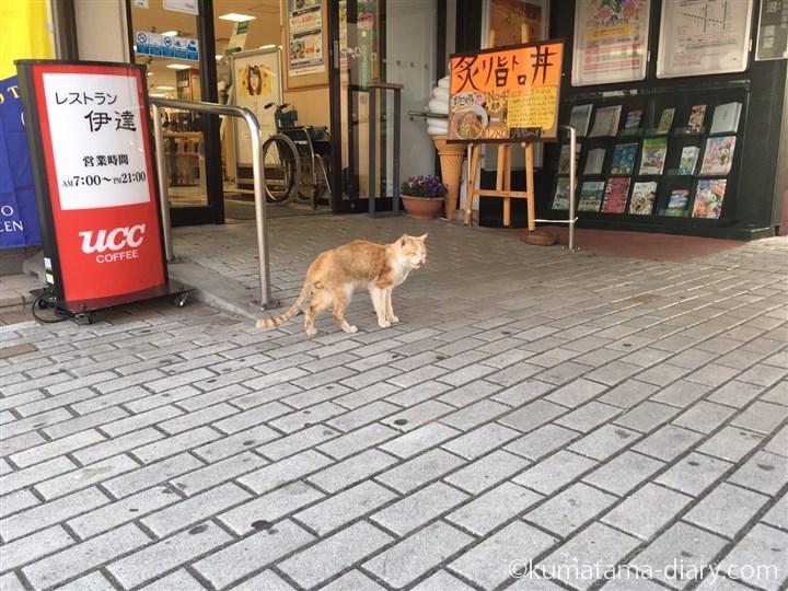 SAの茶トラ白猫さん