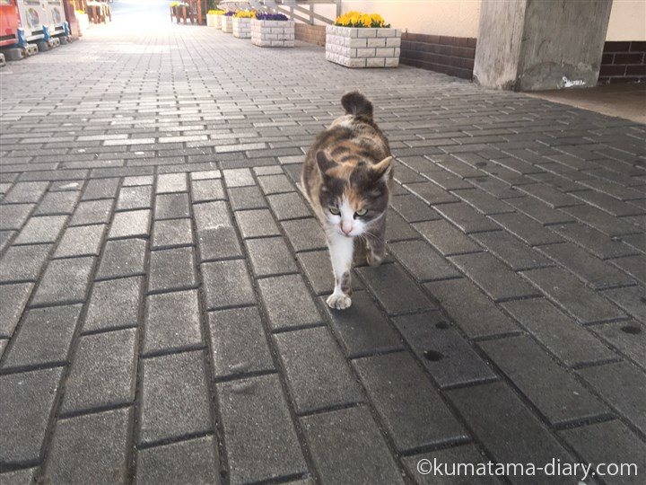 SAの三毛猫さん