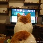 テレビの野球中継を見る猫