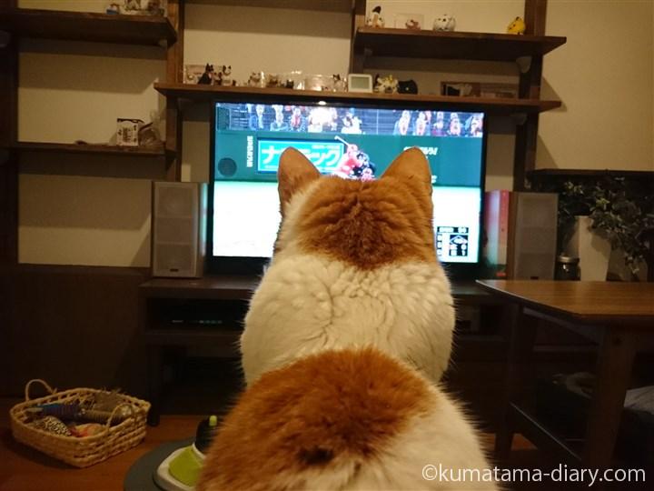 野球中継を見るたまき
