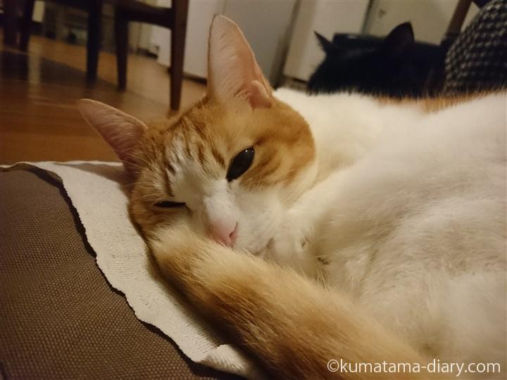 眠るたまき