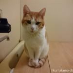 うちの猫はなぜこんなにお風呂が好きなのか?