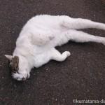 足をピンと伸ばして寝転がっていた近所のキジトラ白猫さん