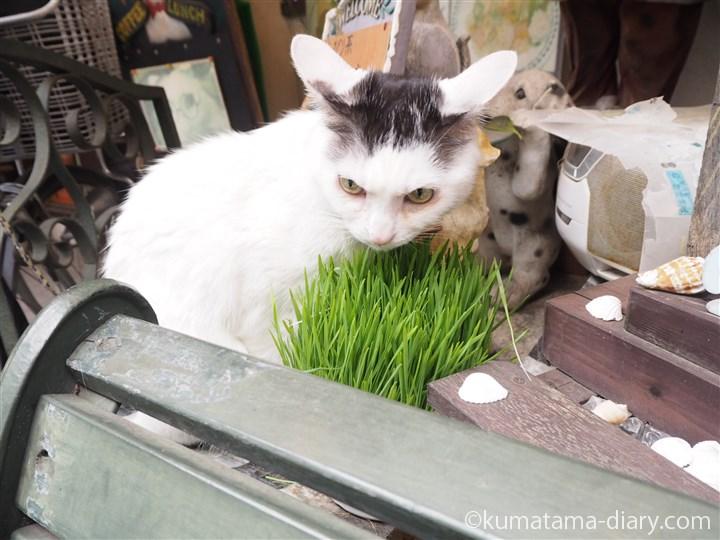 草を食べる次郎長くん