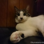 【新宿三丁目】看板猫がいる喫茶店「カフェアルル」に行ってきました