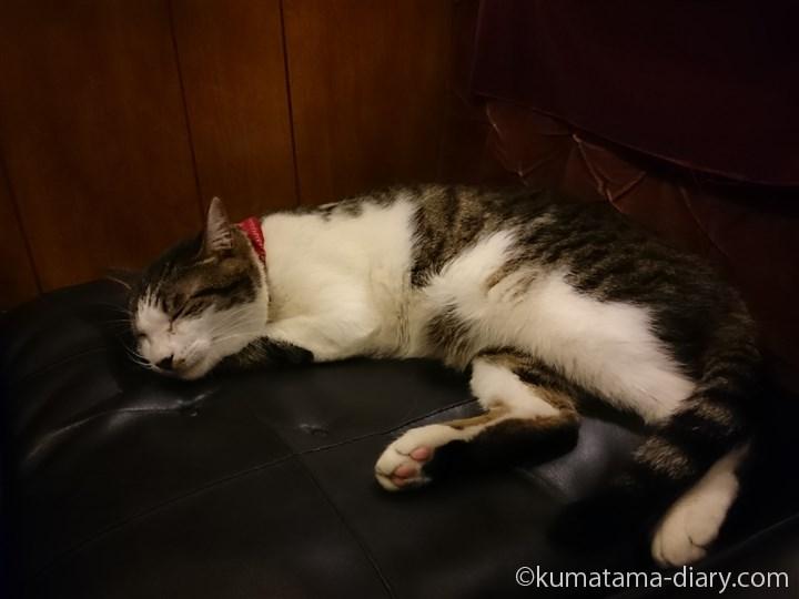 眠る石松くん