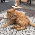 【神奈川県三浦半島】城ヶ島の猫さんたち