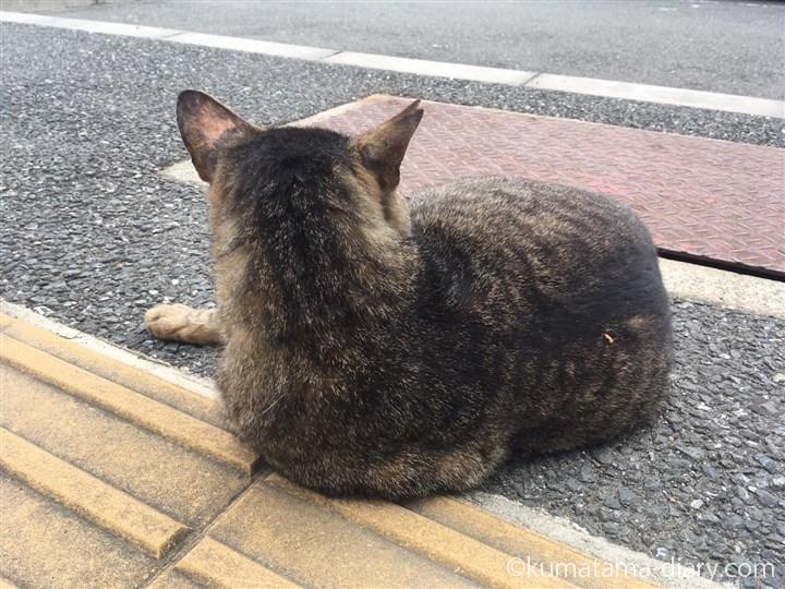 さくら猫のキジトラ猫さん