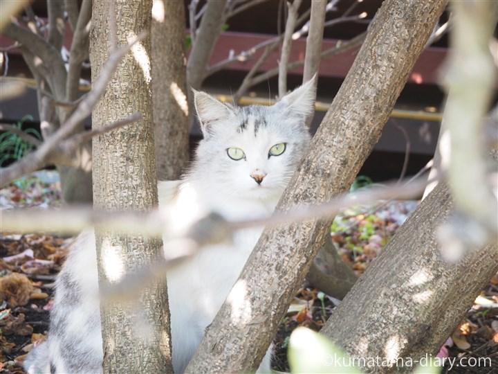 木の間の三崎猫さん