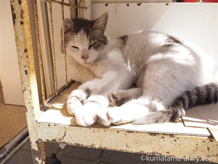 三崎書店の猫さん