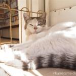 【神奈川県三浦市】三崎の本屋さんの仲良し猫さんたち