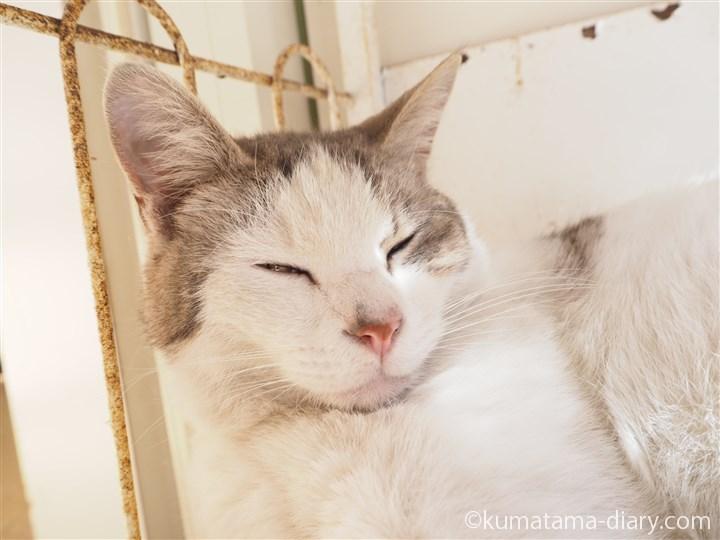 三崎書店の猫さんアップ