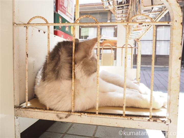 三崎書店の猫さん後ろ