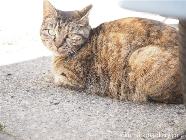 メス猫さん