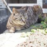 【神奈川県三浦市】にゃんたま好きにはたまらない三崎の猫さんたち