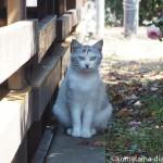 【神奈川県三浦市】三崎で見かけた猫さんたち