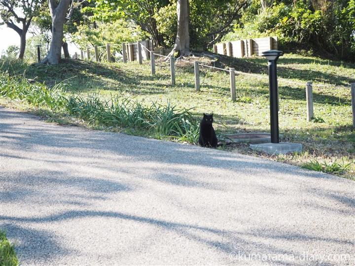 黒猫さん発見