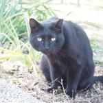 【神奈川県三浦市】城ヶ島公園の黒猫さん