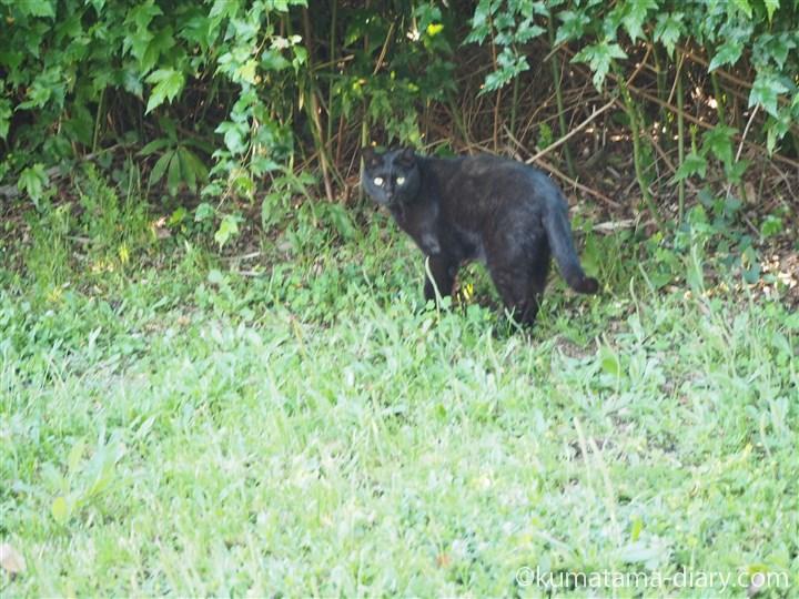 こちらを見る黒猫さん