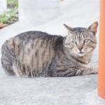 【神奈川県三浦市】城ヶ島で猫さんたちを追いかけました