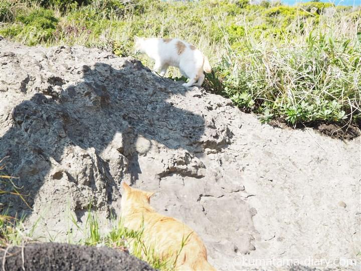 上に向かう茶トラ白猫さん