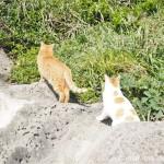 【神奈川県三浦市】城ヶ島で岩山に登る猫さんを追いかけました