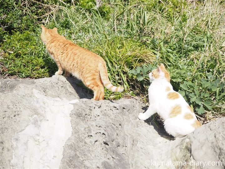 後ろで休憩する茶トラ白猫さん