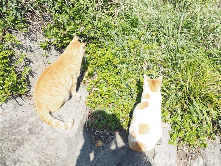 茶トラ猫さんと茶トラ白猫さんと私